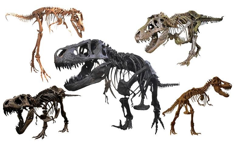 5体の骨格