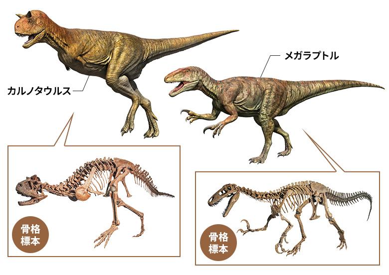 カルノタウルス・メガラプトル