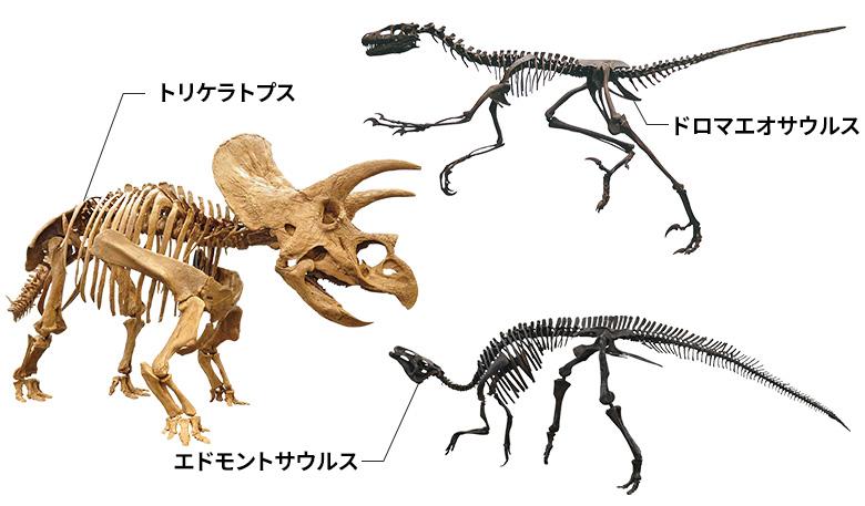 トリケラトプス ・エドモントサウルス ・ドロマエオサウルス