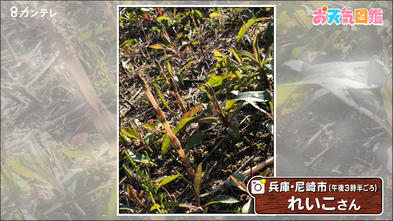 「春みっけ」(兵庫・尼崎市)