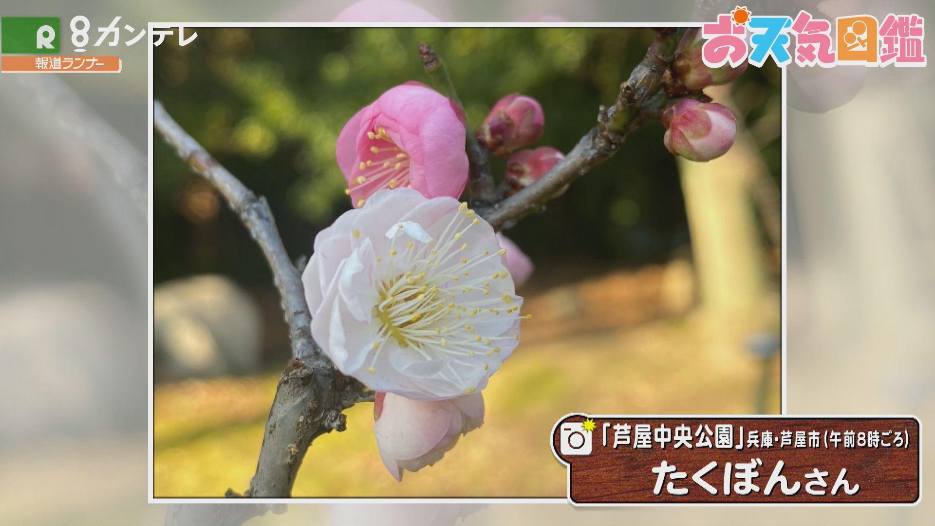 「思いのままに咲きます」(兵庫・芦屋中央公園)
