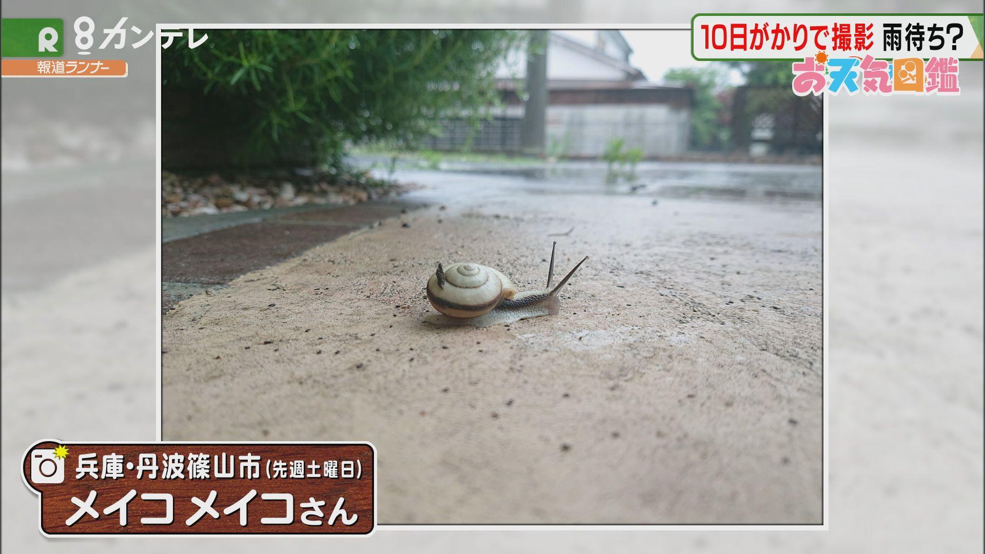 「10日がかりで撮影」(兵庫・丹波篠山市)