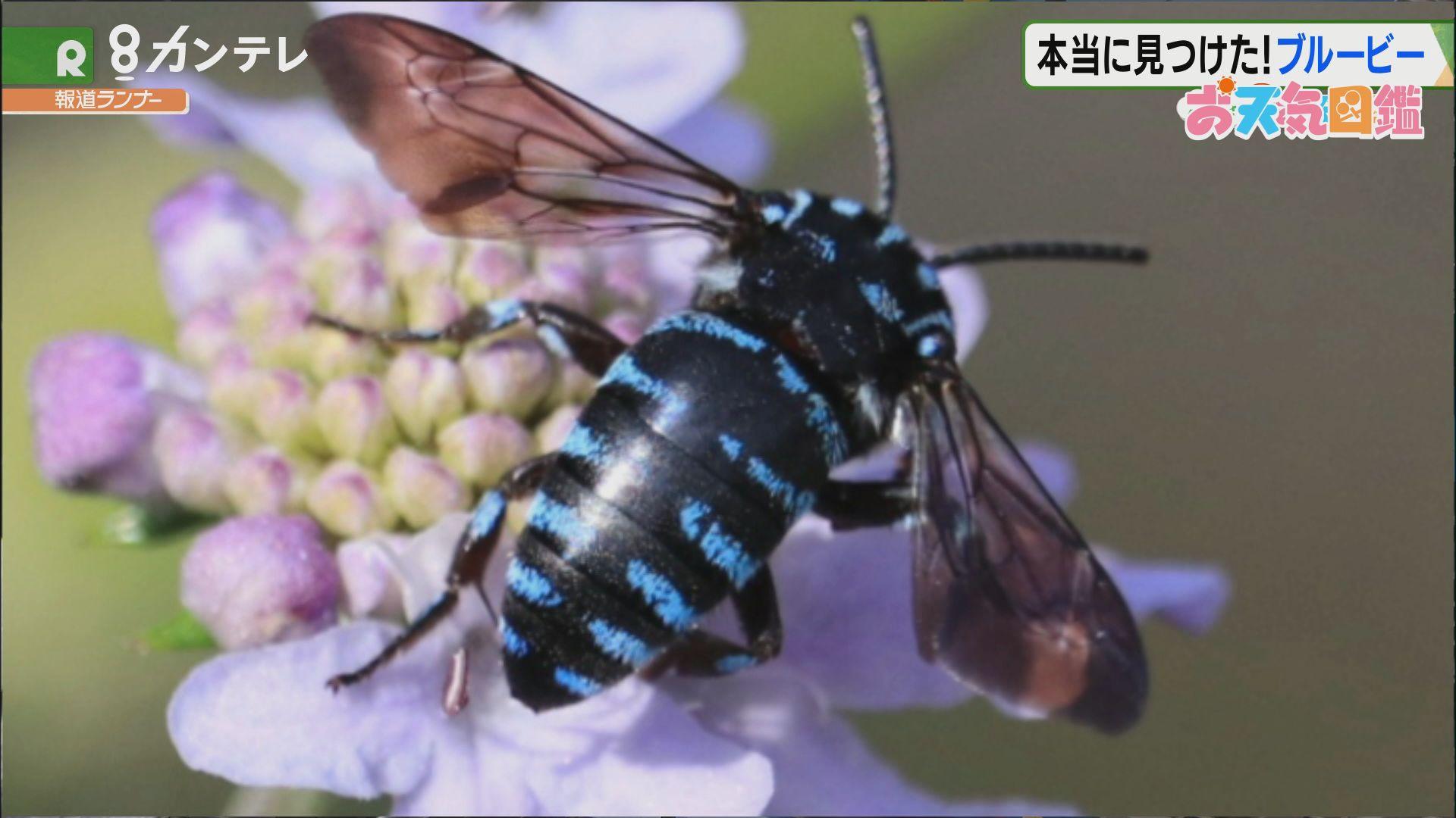 「見つけた!ブルー・ビー」(神戸市)