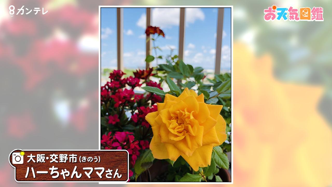 「黄色がお気に入り」(大阪・交野市)
