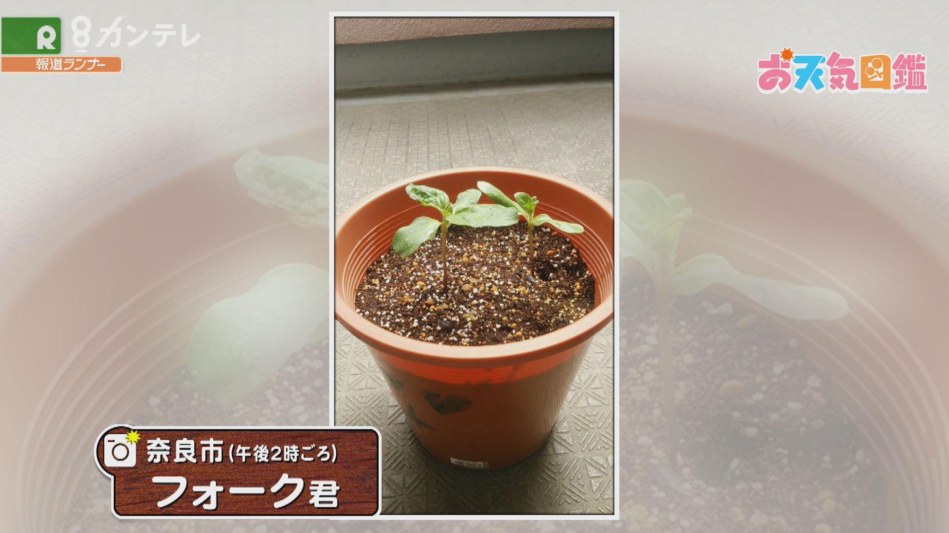 「元気に育って!」(奈良市)