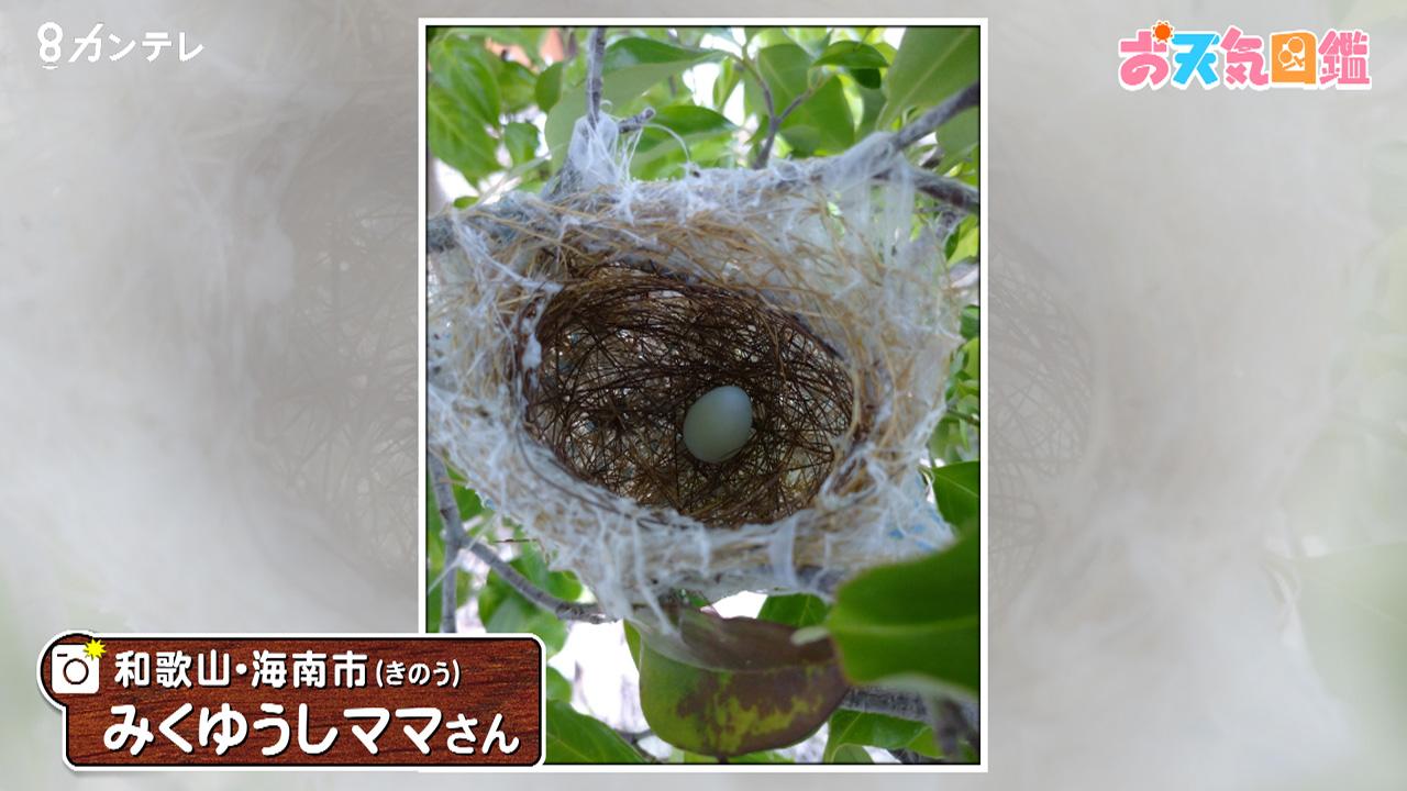 「庭で見つけたキレイな巣」(和歌山・海南市)
