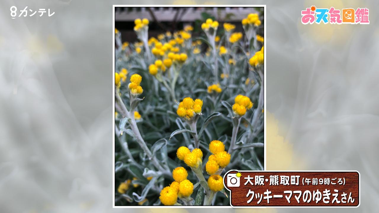 「笑顔がステキ?な黄色い花」(大阪・熊取町)