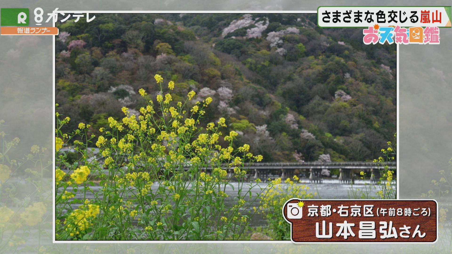 「カラフルな嵐山」(京都市・右京区)