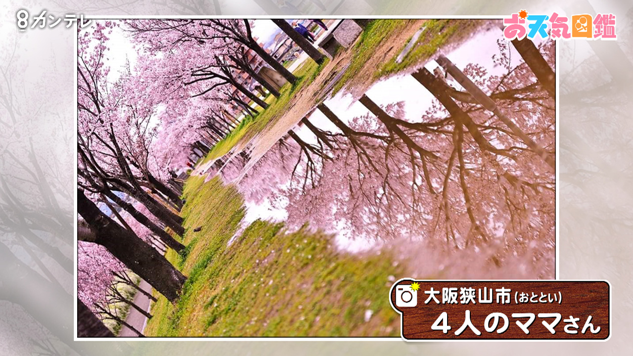 「逆さ桜」(大阪狭山市)