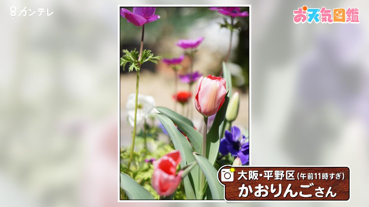 「チューリップ」(大阪・平野区)