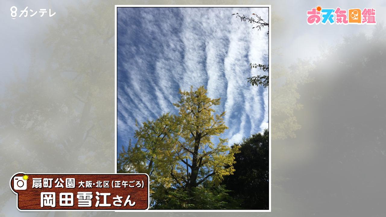 「イチョウと秋の雲」(大阪・北区)
