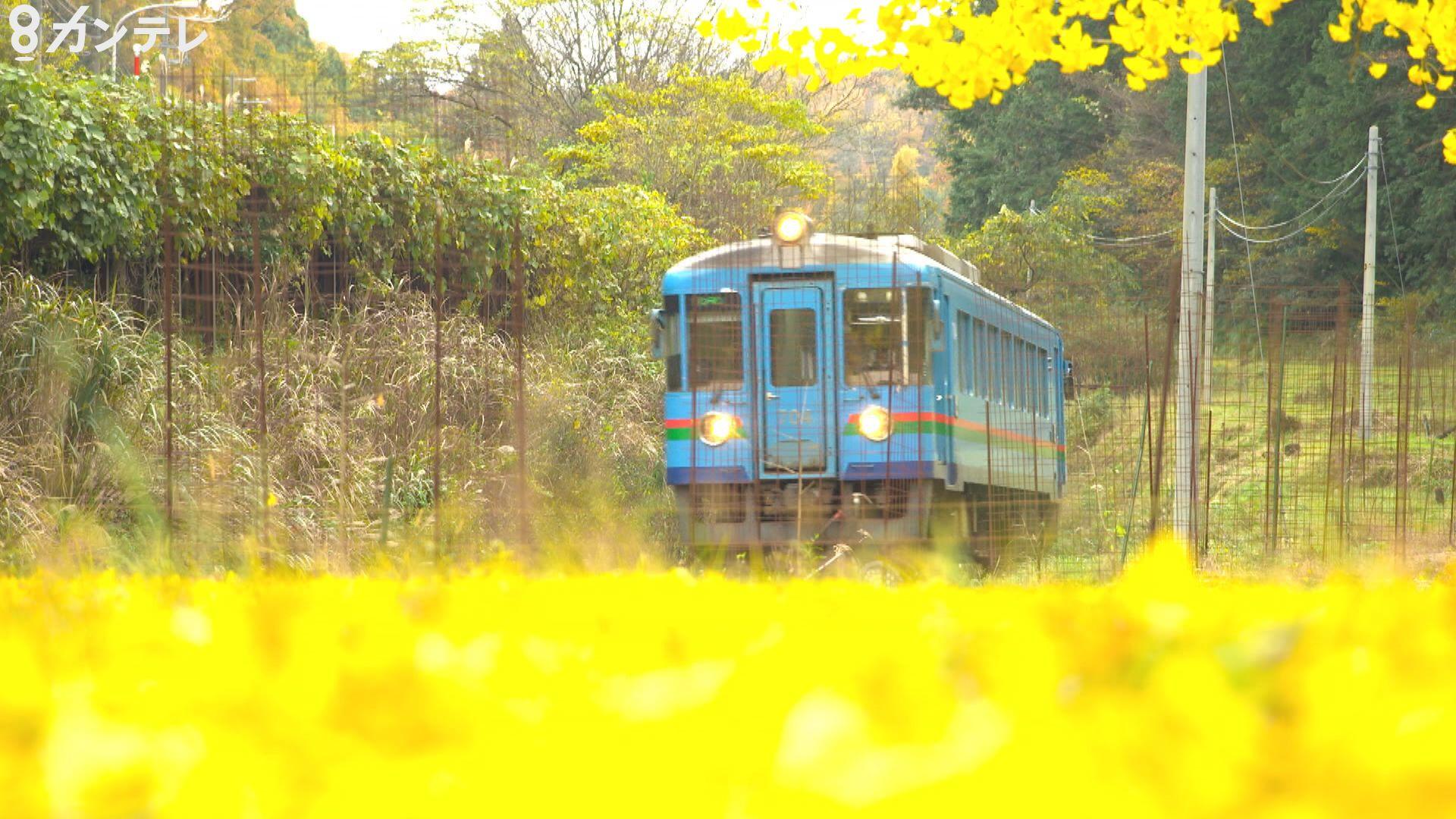 【映像】『京都丹後鉄道の秋』 美しい紅葉の中を走る鉄道、それを支える若い世代の奮闘