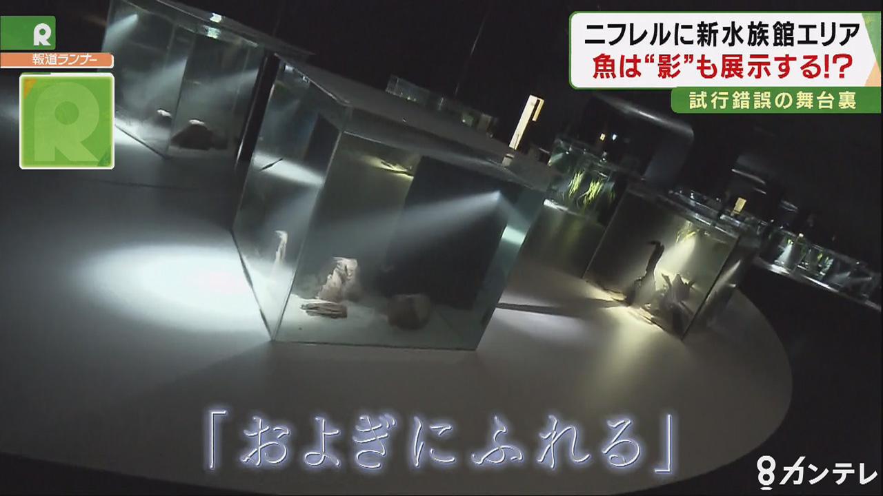 【特集】「魚オタク」の名物館長が挑んだ『魚の影』を展示する新エリア 試行錯誤の舞台裏