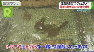 """新実のハッケン!「""""陸上養殖""""最前線 滋賀から高級ブランド魚を!」"""