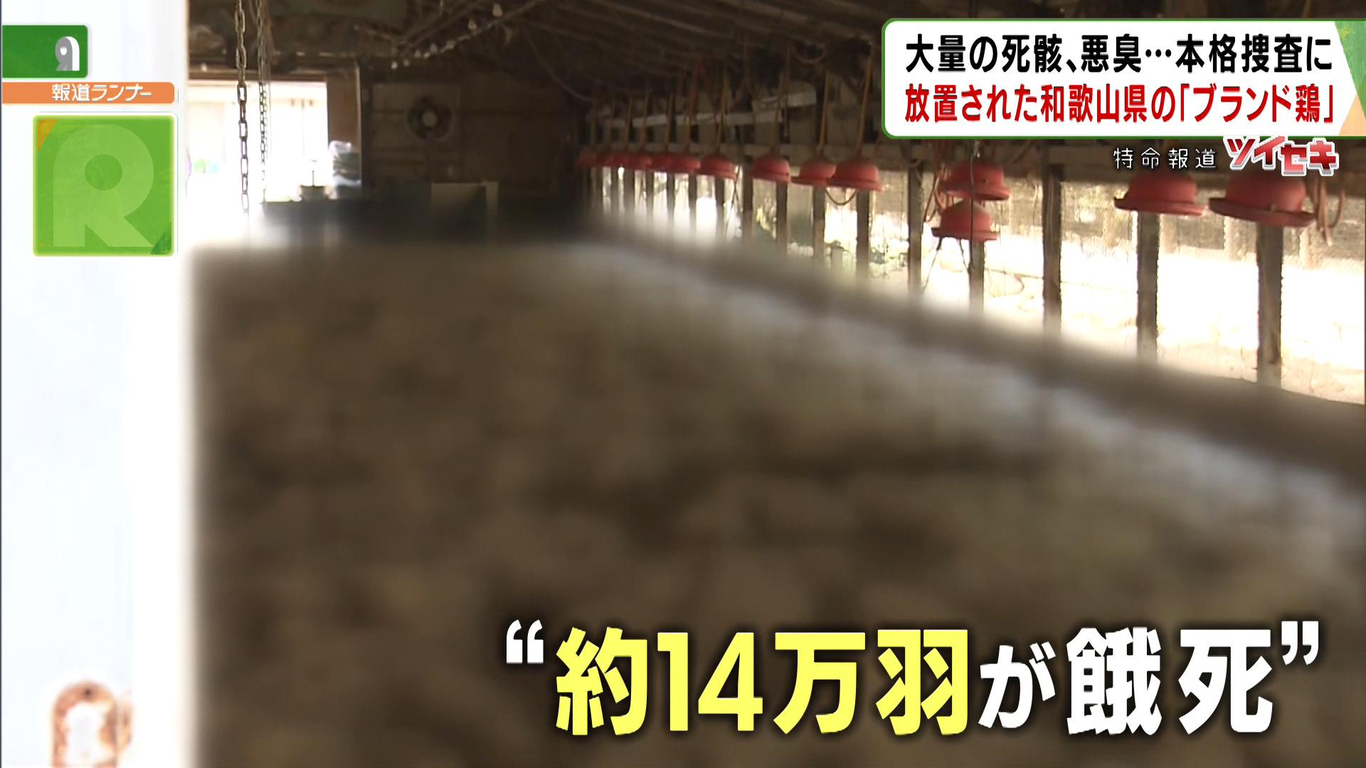 悪臭放つ14万羽の死骸、放置された大量のフンから火災も…和歌山県のブランド鶏「紀州うめどり」経営破綻の裏に「不可解な動き」