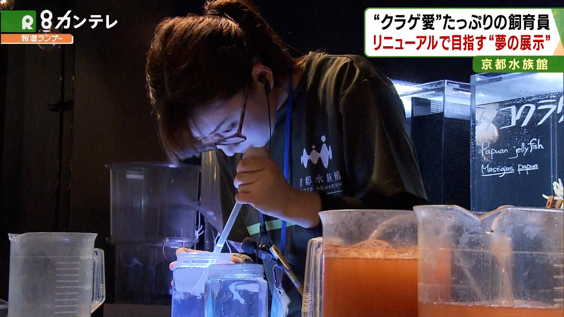 """""""クラゲ愛""""たっぷり!25歳の飼育員、リニューアルで目指した「夢の展示」 京都水族館"""