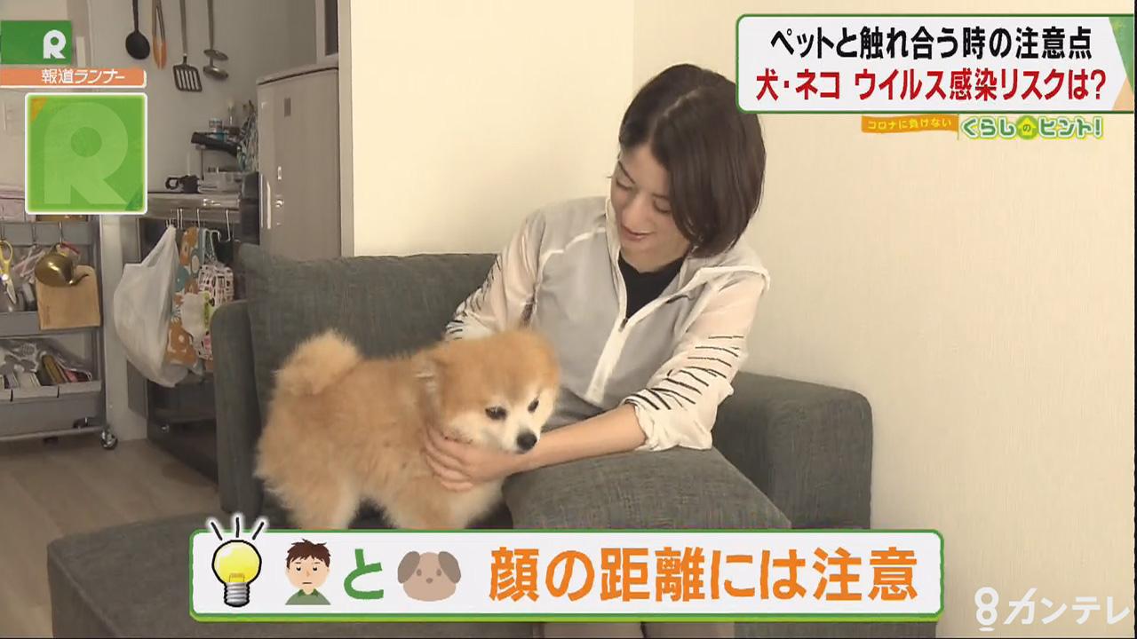 「ペットと触れ合うときの注意点」犬・ネコ ウイルス感染リスクは?