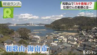 """新実のハッケン!「和歌山で『カキ養殖』!? 移住者が試みる""""町おこし""""」"""