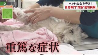 """目撃ランナーSCOPE「ペットの命を守る!夜間専門""""救急""""動物病院」"""