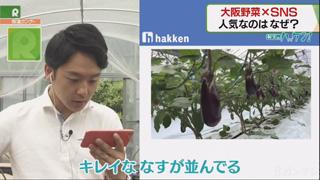 """新実のハッケン!「SNSで魅力発信!""""大阪野菜""""宅配サービス」"""