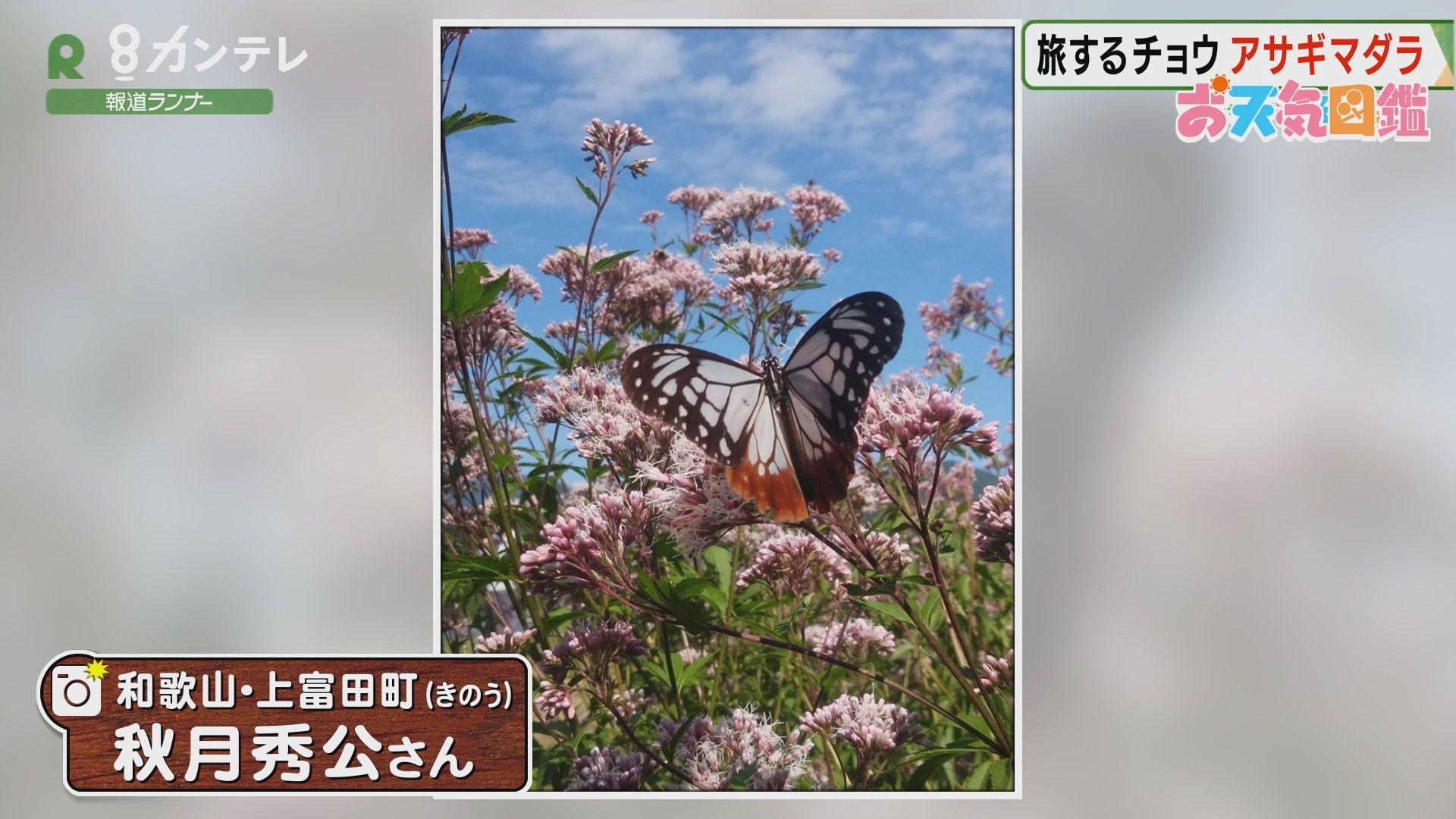 「旅する蝶がやってきた!」(和歌山・上富田町)