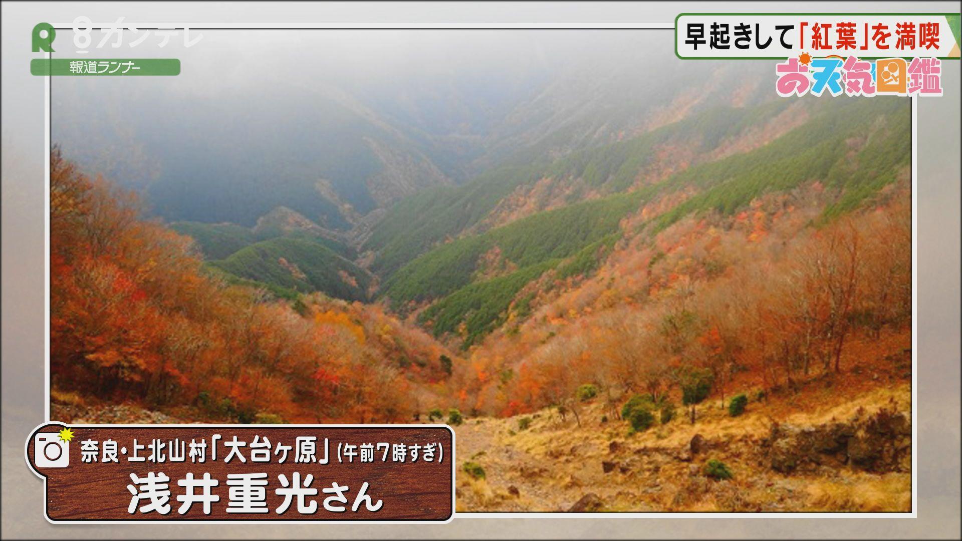 「早起きしてたどり着いた…紅葉の絶景」(奈良・大台ヶ原)