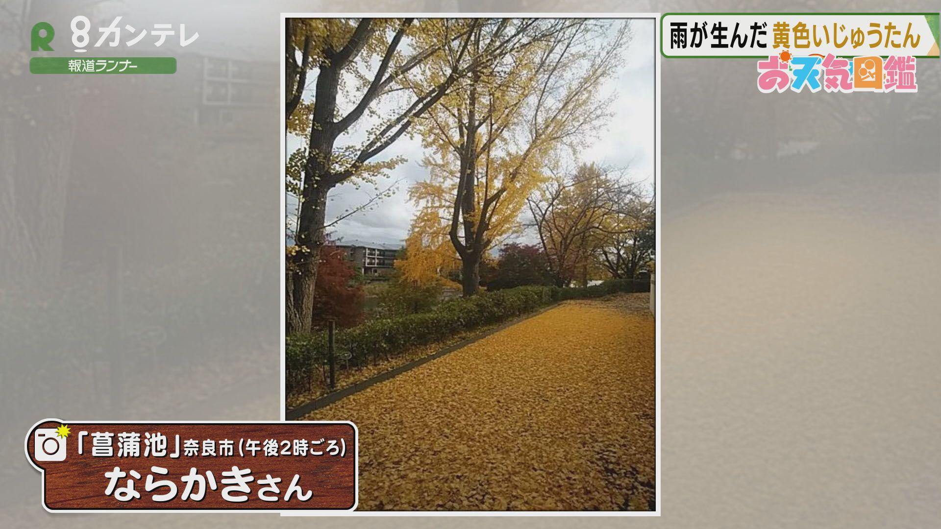 「落ち葉のじゅうたん」(奈良市)