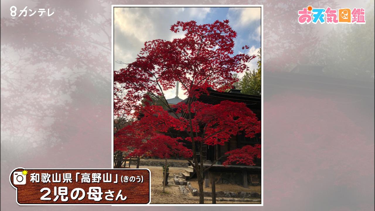 「高野山の紅葉」(和歌山県)