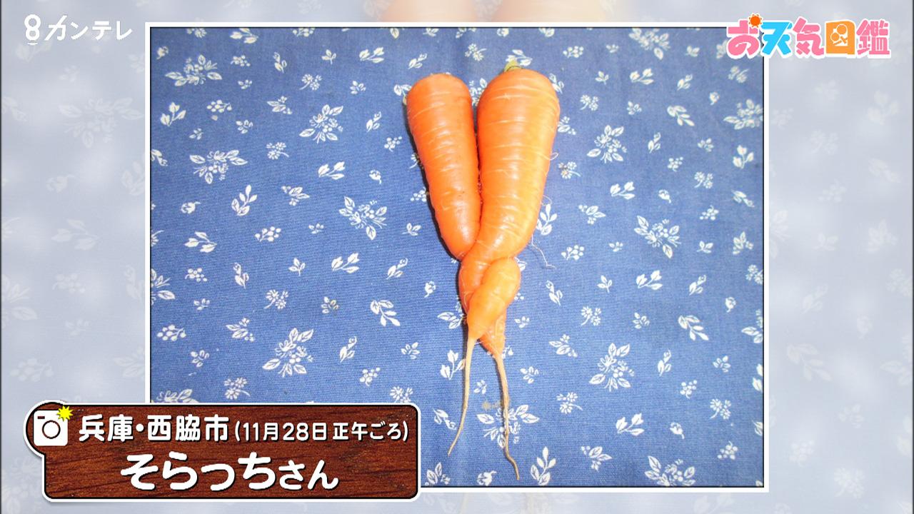 「絡み合うニンジン」(兵庫・西脇市)