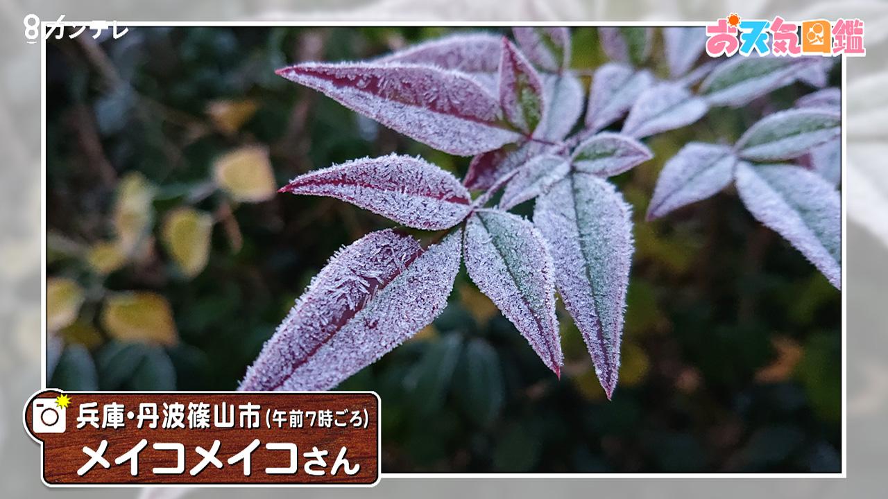 「お菓子みたい…フローズン葉っぱ」(兵庫・丹波篠山市)