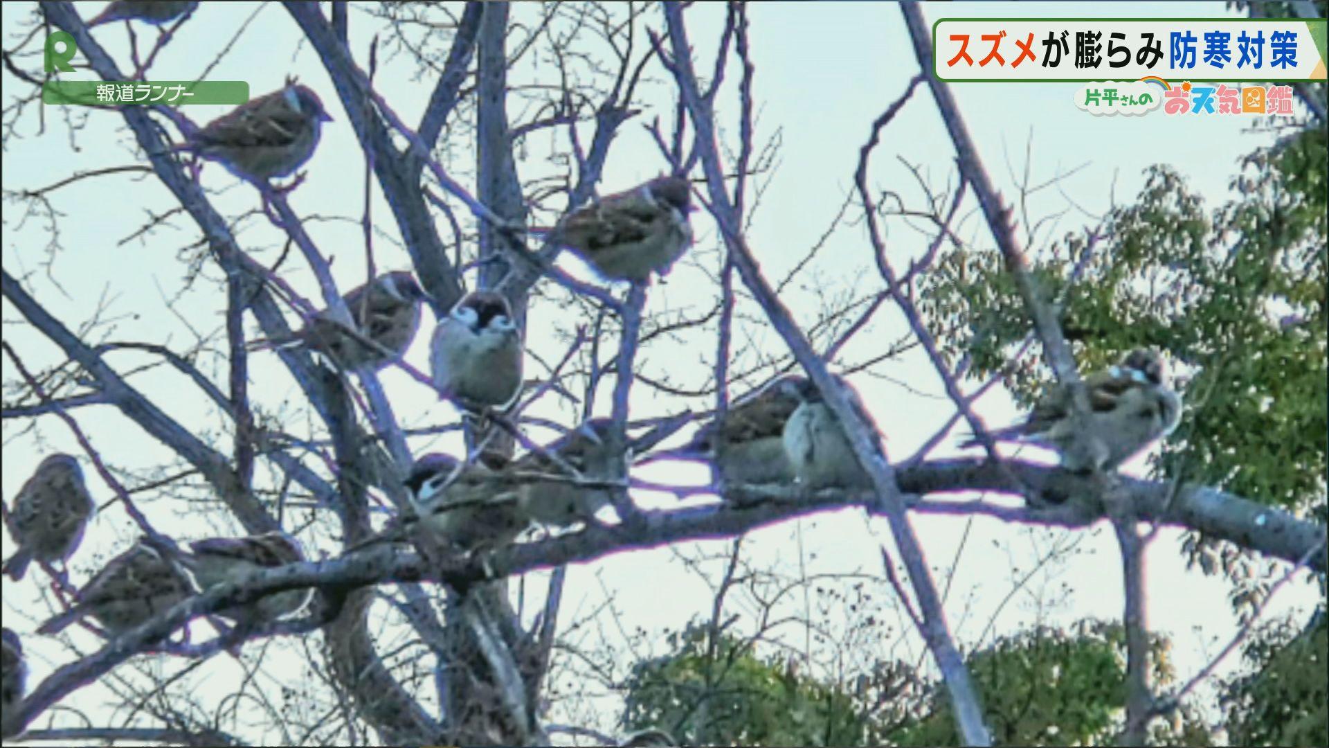 「まん丸!ふくらすずめ」(大阪城公園)