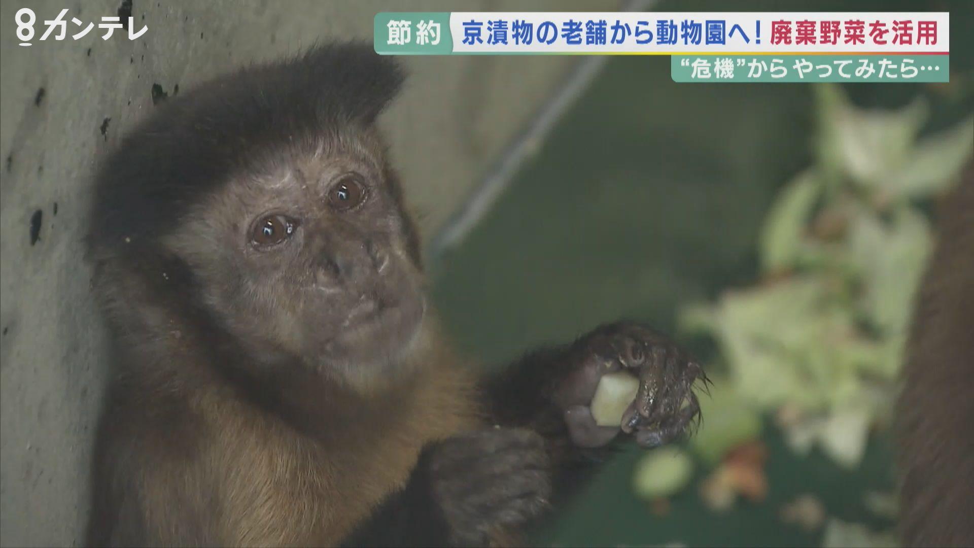 財政難…京都市動物園の節約法「エサは寄付で」  漬物店から造園業者まで…地域で広がる寄付の輪