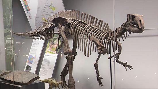 ティラノサウルス展