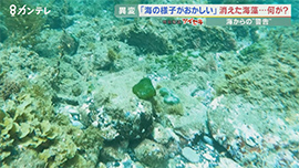 和歌山の海の異変 アマモが消え、貝もひじきも消えた